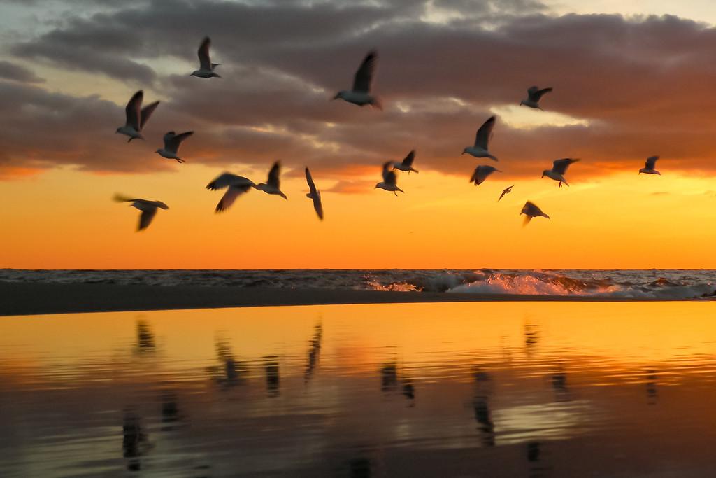 2011 3-3 Seagulls SBPB - 1